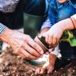 A photo showing the hands of a mature man helping a young child plant a seedling in the ground.