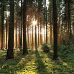 Sunlight peeks through trees in a forest